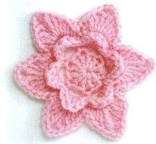 rosellina stellata rosa.jpg